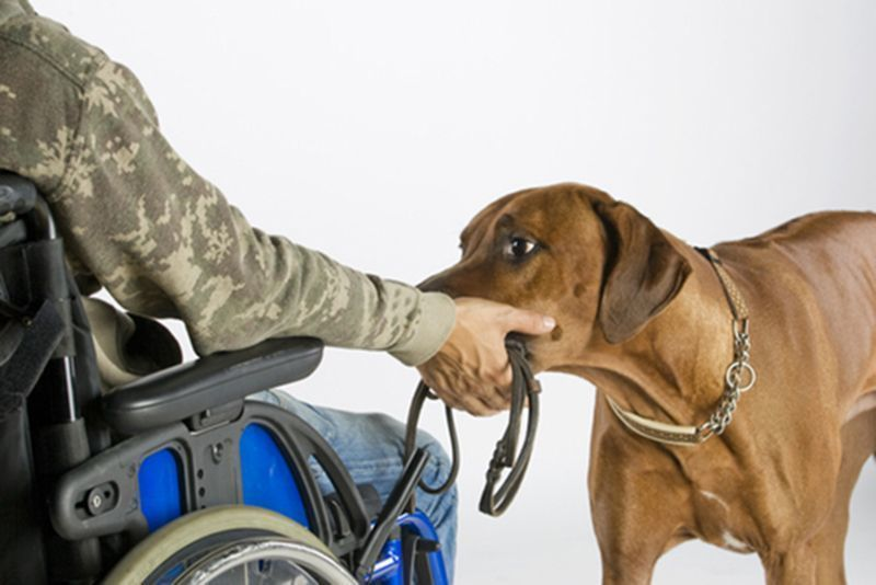 Therapy Dog Training In Rhode Island
