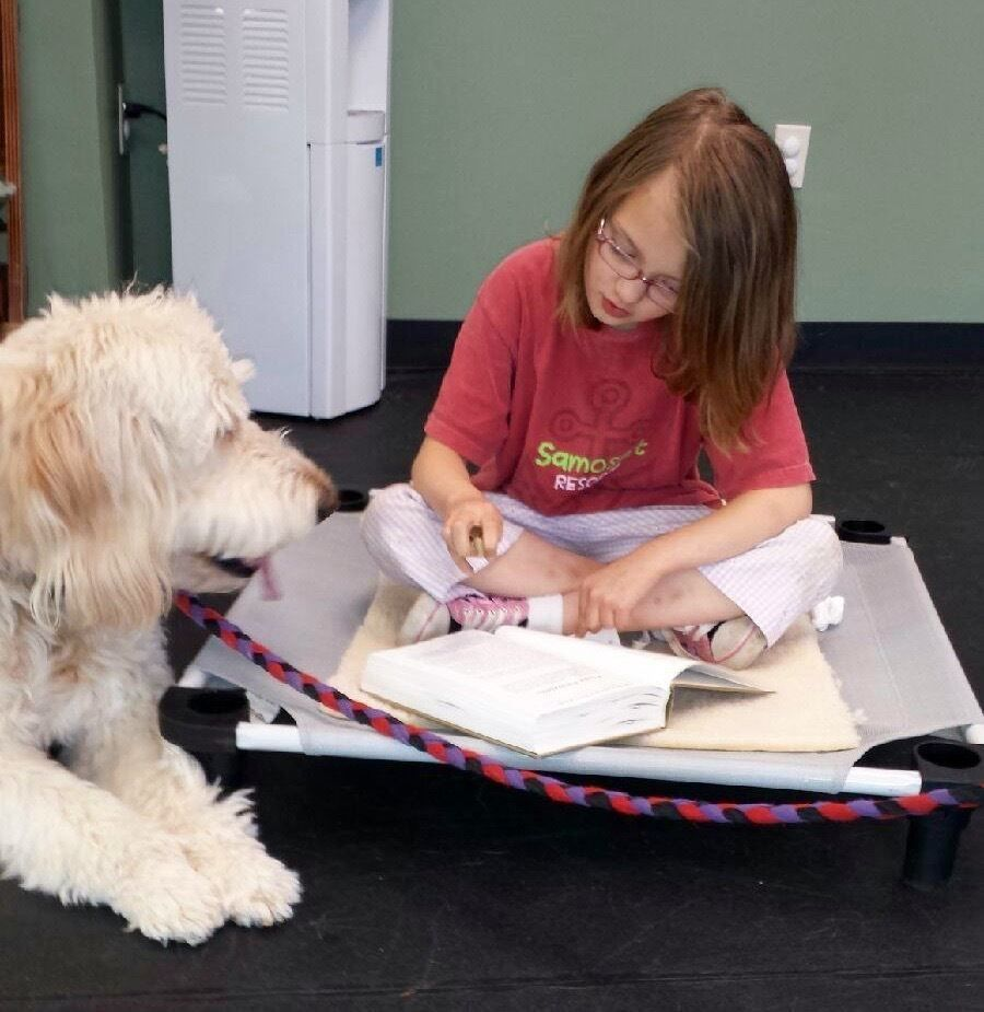 Therapy Dog Training in NH, ME & VT (603) 369-4738 - College