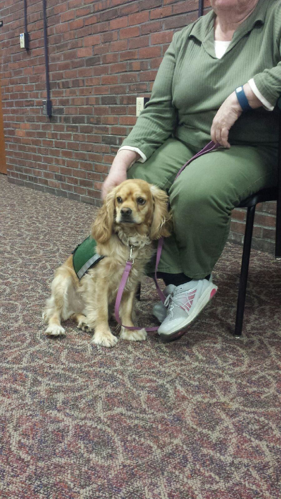 Therapy dog training in nh me vt 603 369 4738 college for pets therapy dog training xflitez Images