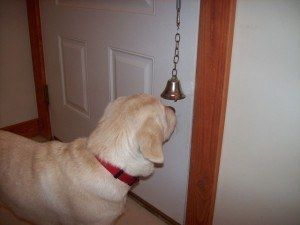train your dog to ring a bell