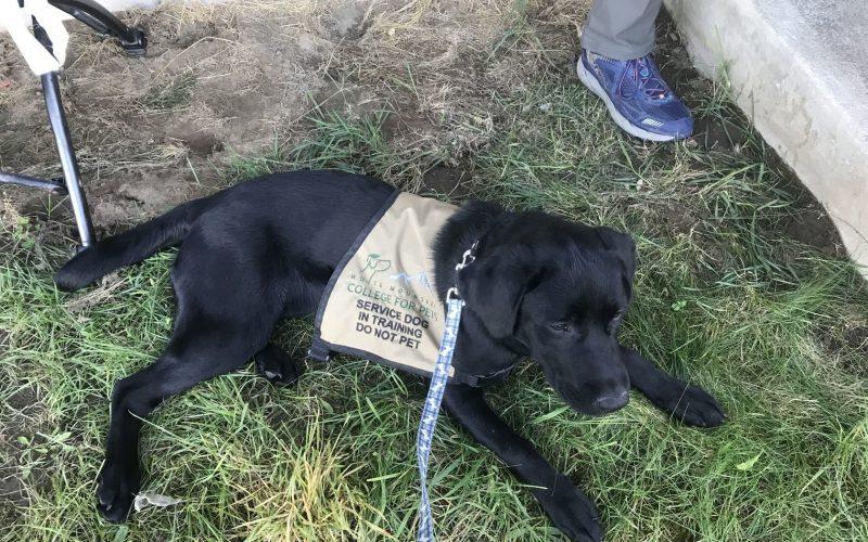 service dog laws
